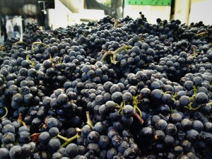 Claiborne & Churchill Pinot Noir