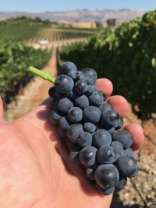 Pinot Noir, Clone 2A: Greengate Ranch & Vineyard