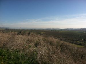 islay hill, claiborne & churchill, hike, Trails of SLO Wine Country